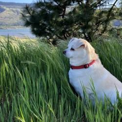 Blossom in Tall Grass
