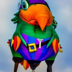 Pirate Parrot Adventures