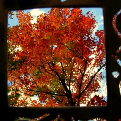 Singing Fall Tree