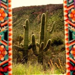Glory to the Cactus