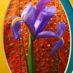 Eyeing an Iris