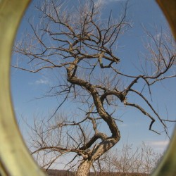 When trees dance