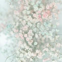 Daltana Pastel Floral Bina