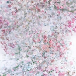 Daltana Pastel Floral Dianola