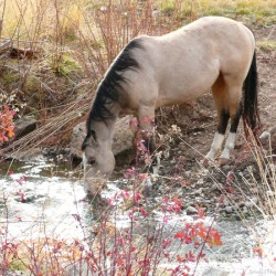 Horse Drink