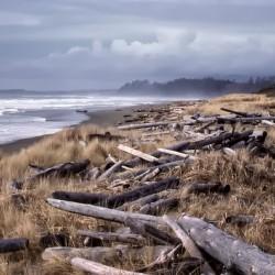Beached Driftlogs