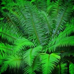 Just Ferns