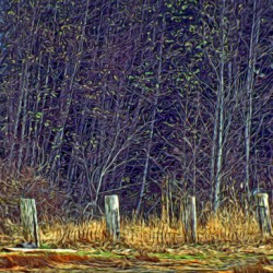 Weathered Fence Posts