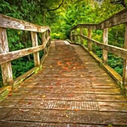 Bridge in the Sanctuary