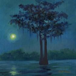 Moon light Cypress