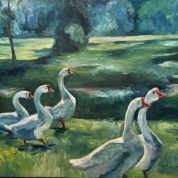 Geese at St. Francisville