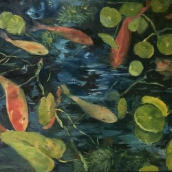 Koi and water clover