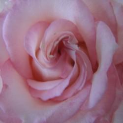 Softness