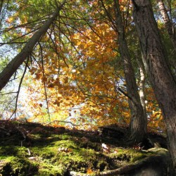 Autumn Rising