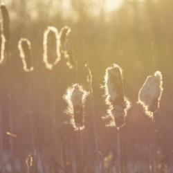 Morning in the Marsh III