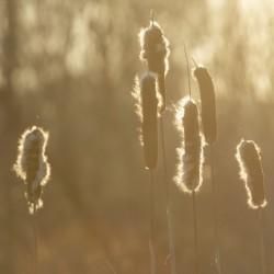 Morning in the Marsh II