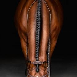 Horse Braids Portrait