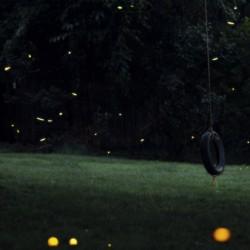 Fireflies in Pennsylvania