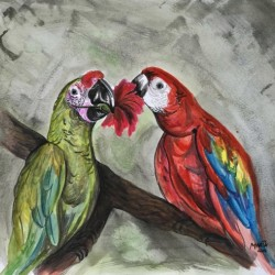 Collection COSTA RICA-Parrots