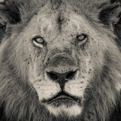 The King of South Africa - 2