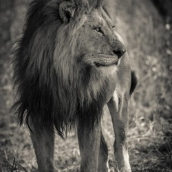 The King of South Africa - 3