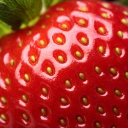 Fresh strawberry close-up