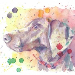 Weimaraner Dog - Portrait of Nandi