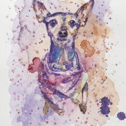 Chihuahua - Portrait of Gigi