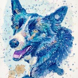 Border Collie Dog - Portrait of Habbey