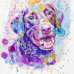 Labrador Dog - Portrait of Cooper
