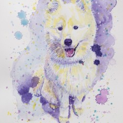Samoyed Dog - Portrait of Juno