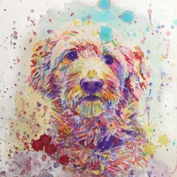 Goldendoodle - Portrait of Link