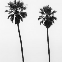 Palm trees by the sea | monochrome