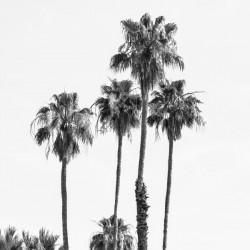 Palm Trees at the beach | monochrome
