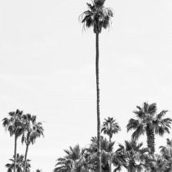 Palm Trees Summertime | monochrome