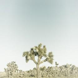 Joshua Tree | Vintage