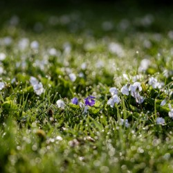 Confettis au jardin 2