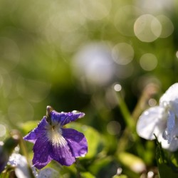 Confettis au jardin 4
