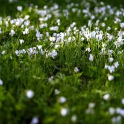 Confettis au jardin 3