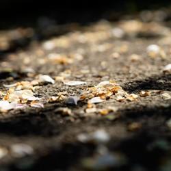 Confettis sur bitume