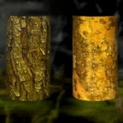 tree bark sentinels