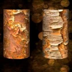 tree bark symphony