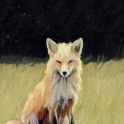 Fox on the Lawn