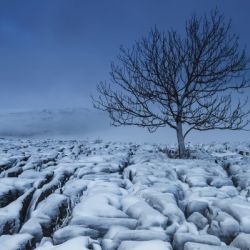 Cold Blue Trees, Yorkshire Dales, UK