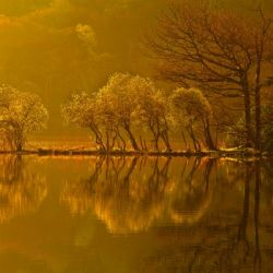 Gold Morning, Lake District, UK