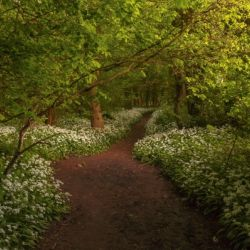 The Path to Fairytales, Ramsons Wood, Lancashire, UK