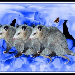 Party Of Possums