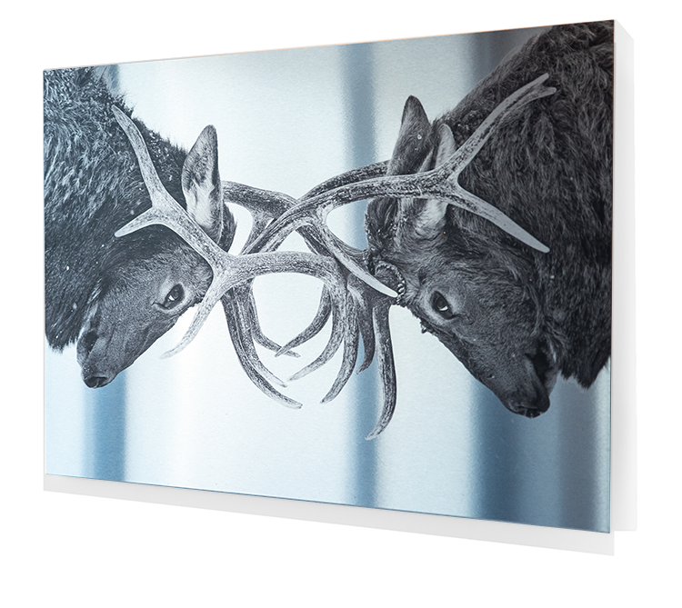Aluminum Metal Print