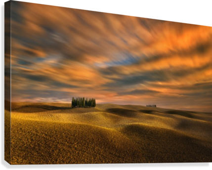 Cypresses...  Canvas Print
