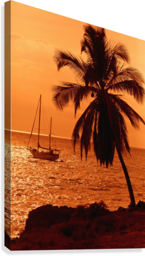 Sailboat and palm tree at sunset; Kihei, Maui, Hawaii, United States of America  Canvas Print